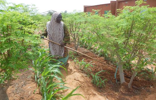 Madam Domo Oumarou working in the fields