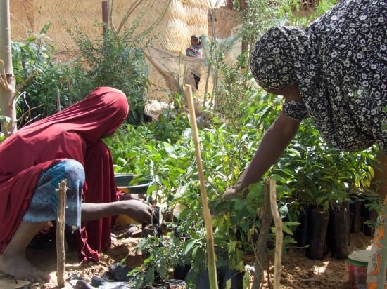 women working in the tree nursery